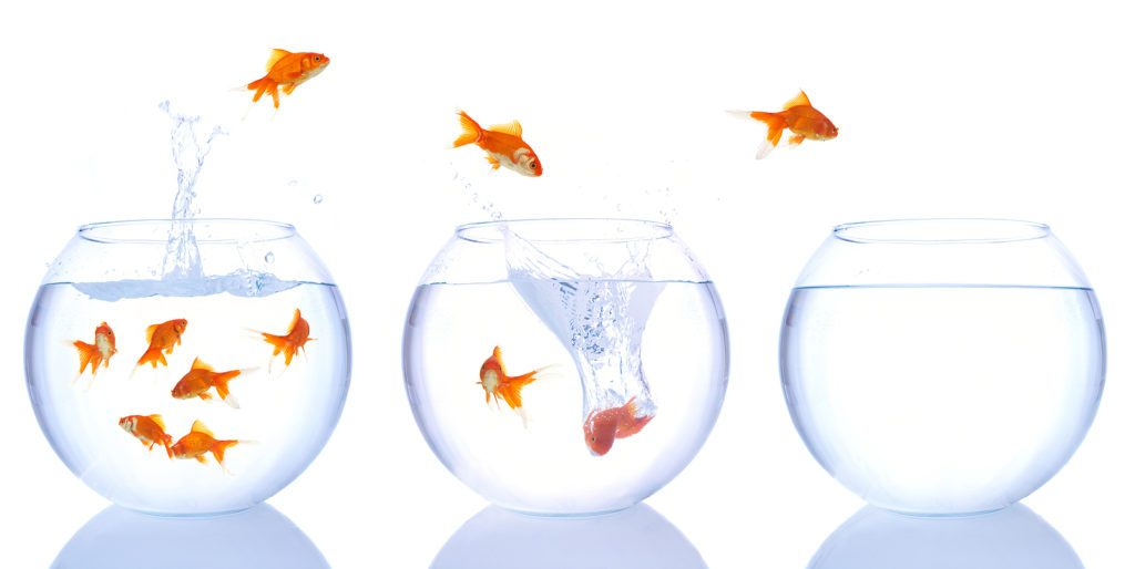 golfish jumping from bowl- another way to advance your project management career